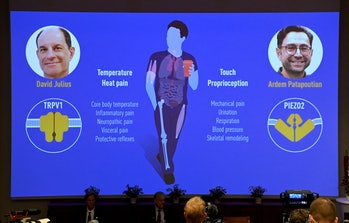 Members of the Nobel Committee for Physiology or Medicine sit in front of a screen displaying the wi...