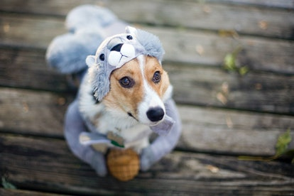 Whatever adorable Halloween dog costume you choose for your pup, these captions for dog costumes wil...
