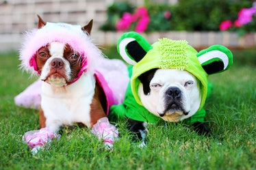 Use these captions for dog costumes when posting an Instagram of your pup's Halloween disguise.