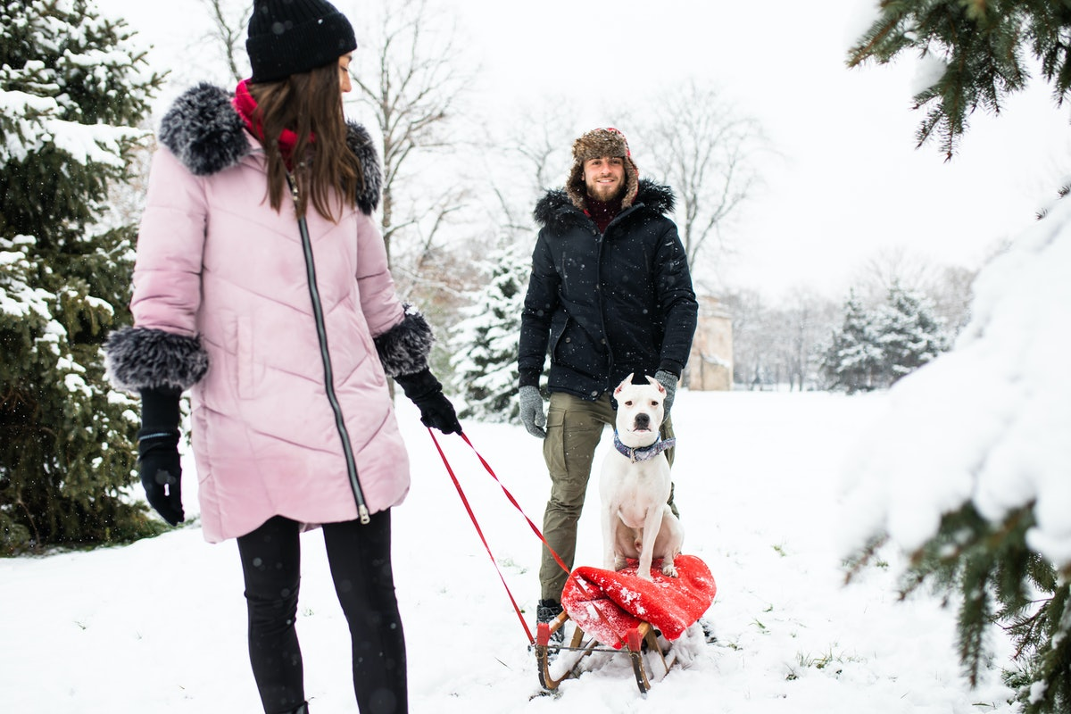 Two friends and their dog play in the snow on a snow day.