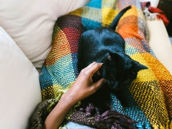 A woman under a blanket pets a black cat. People with chronic illness explain their feelings about forthcoming covid vaccinations.