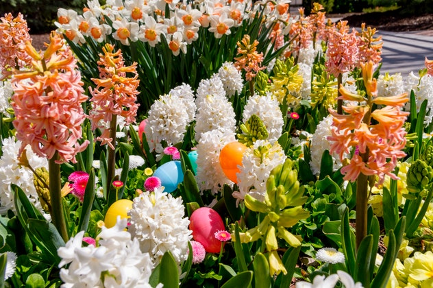You can hide Easter eggs in flowerbeds for a tricky spot, too.
