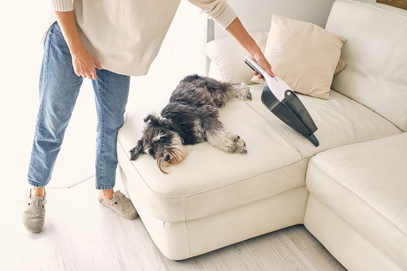 A woman in jeans and slippers vacuuming the sofa at home with her dog lying relaxed on the sofa.