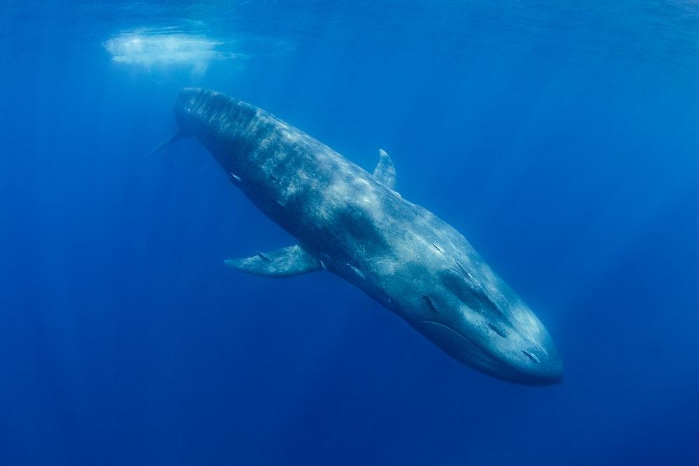 whale noise pollution