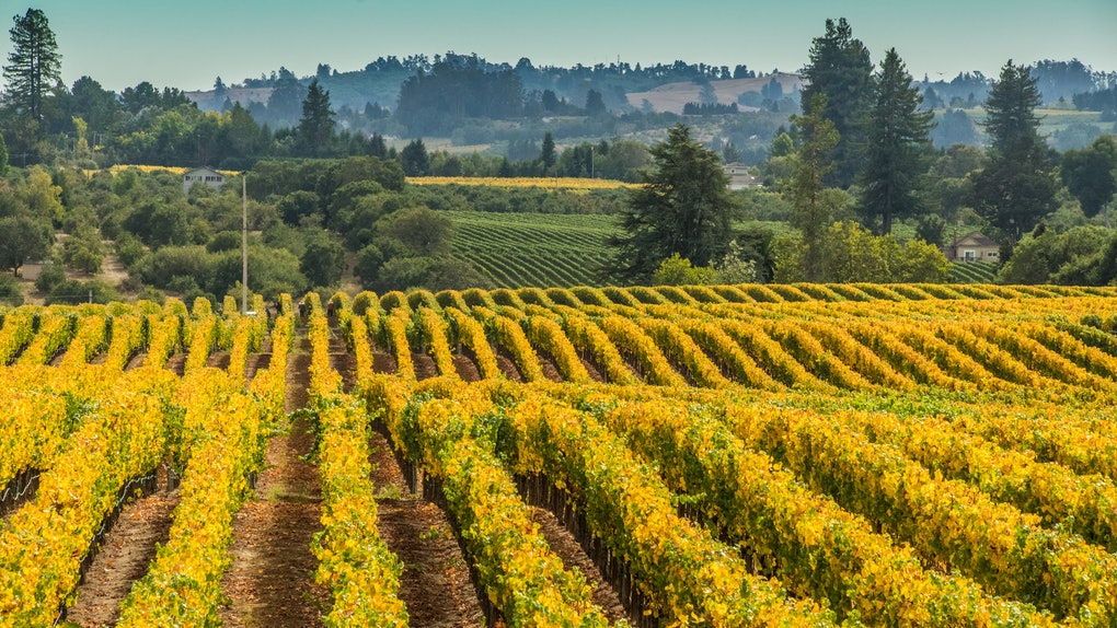 You can apply to Murphy-Goode Winery's job in Sonoma County until June 30.