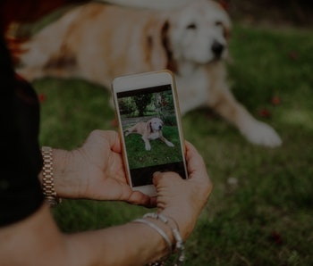 Person using an iPhone to take a picture of a dog.