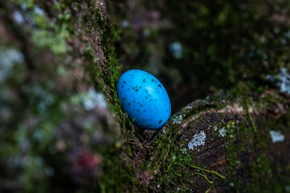 Easter egg in a tree