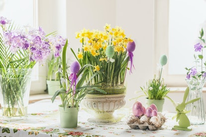 Easter still life with eggs, rabbit decoration and various springtime flowers in pots and vases : yellow daffodils and purple hyacinths, on table at sunny window. Domestic life