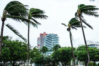 Miami Beach, Marjory Stoneman Douglas Park, Hurricane Irma. (Photo by: Jeffrey Greenberg/Universal I...