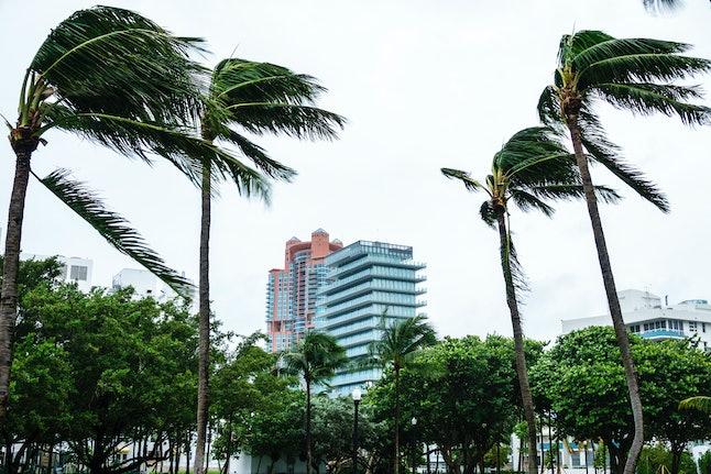 Miami Beach, Marjory Stoneman Douglas Park, Hurricane Irma. (Photo by: Jeffrey Greenberg/Universal Images Group via Getty Images)