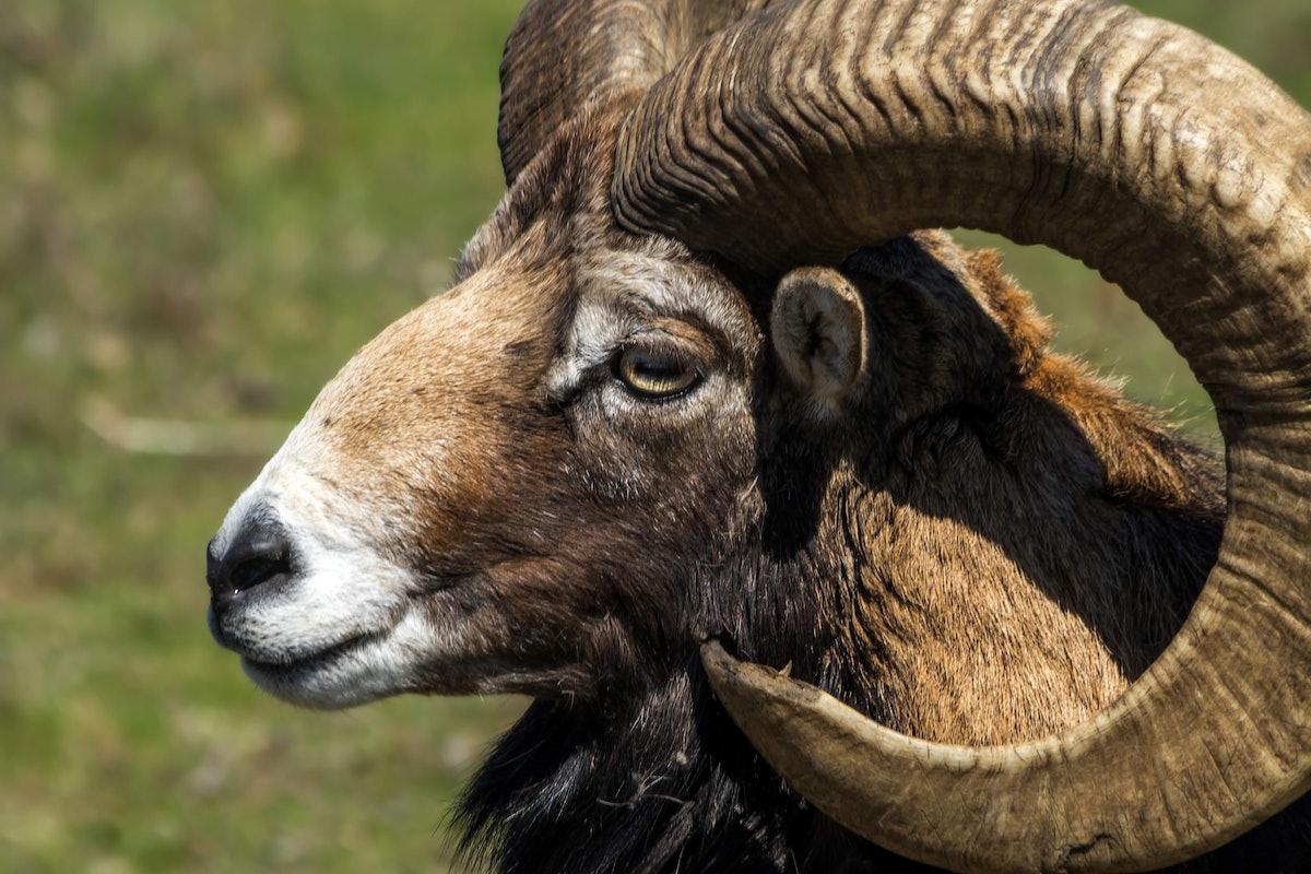 Each Zodiac Sign Has An Animal