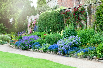 blue flowers and greenery line a stone wall