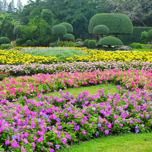 Beautiful flower gardens where flowers are grown and displayed in the  publish park, Garden design