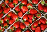 Harvested strawberries lie in the baskets.