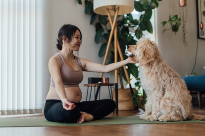 Young Asian pregnant woman meditating at home while her goldendoodle sitting next to her. Having a h...