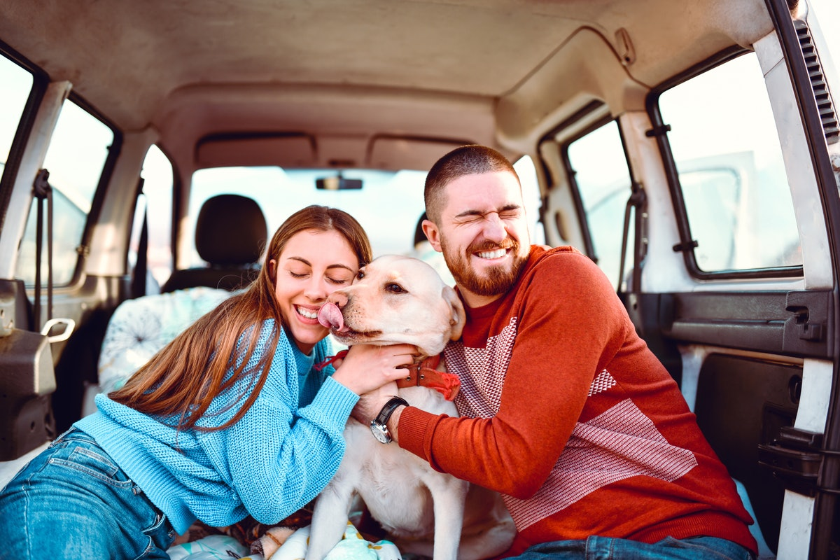 Dog Parents Enjoying Spending Road Trip With Their Pooch