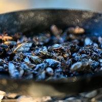 Brood X bon appétit! How to eat cicadas in 5 easy steps