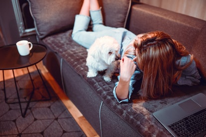 Female Relaxing With Puppy On Sofa And Watching Movie On Laptop