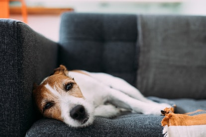A change in behavior is typically the first indication your dog is not feeling well.