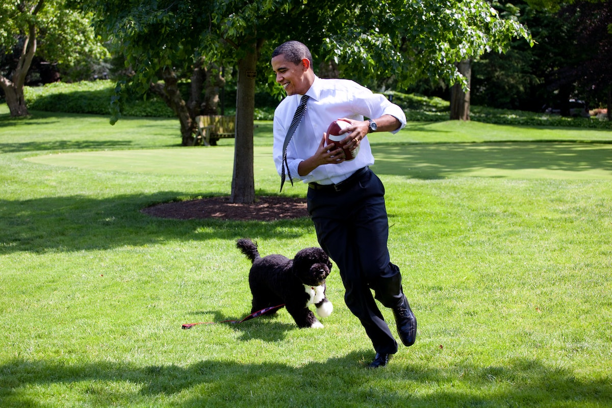 WASHINGTON - MAY12:  In this handout from the The White House, U.S. President Barack Obama plays football with the family dog Bo on the South Lawn of the  White House May 12, 2009 in Washington, DC.  (Photo by Pete Souza/The White House via Getty Images)
