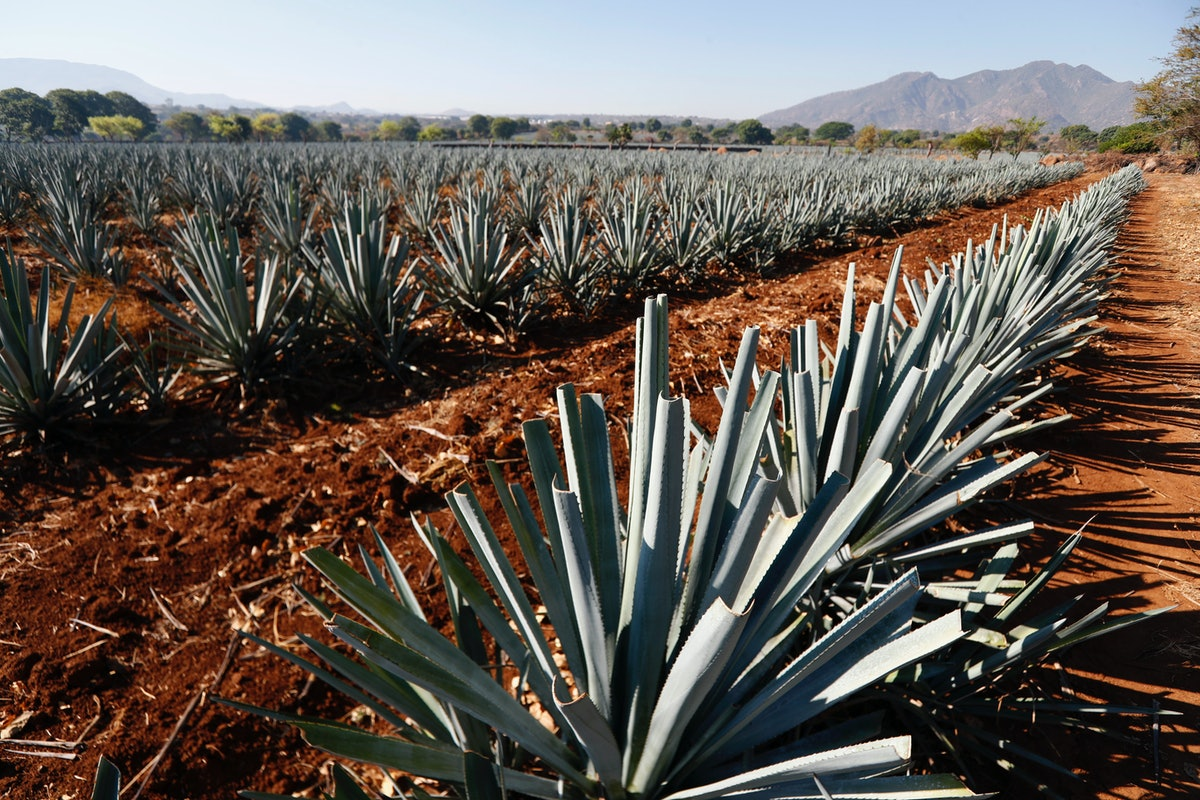 You could win a trip to Mexico to see how Jose Cuervo tequila is made.