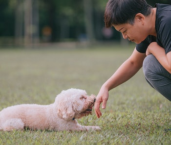 Asian chinese mid adult short hair female with her pet dog toy poodle in public park bonding together morning