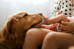 Dogs meeting babies for the first time is so sweet.