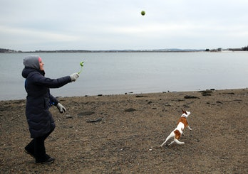 BOSTON - MARCH 3: Emily Niejadlik, 30, of Dorchester throws a ball to her dog, Daisy, as they walk a...