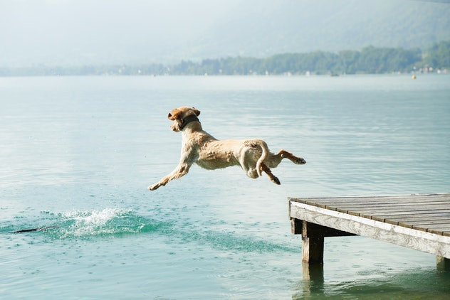 jog jumping off dock into lake