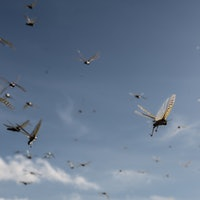 Experimental locust design could change the future of flight