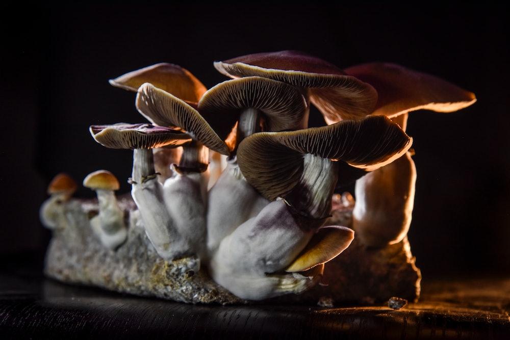 WASHINGTON, DC - FEBRUARY 5: A DC resident has an operation growing psilocybin mushrooms, including ...
