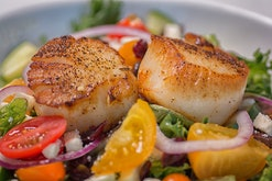 Eating scallops during pregnancy just requires a little cooking first.