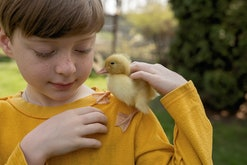 portrait of boy with duckling on shoulder
