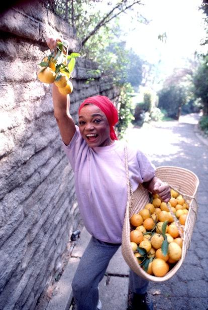 Eartha Kitt picks fruit in Beverly Hills