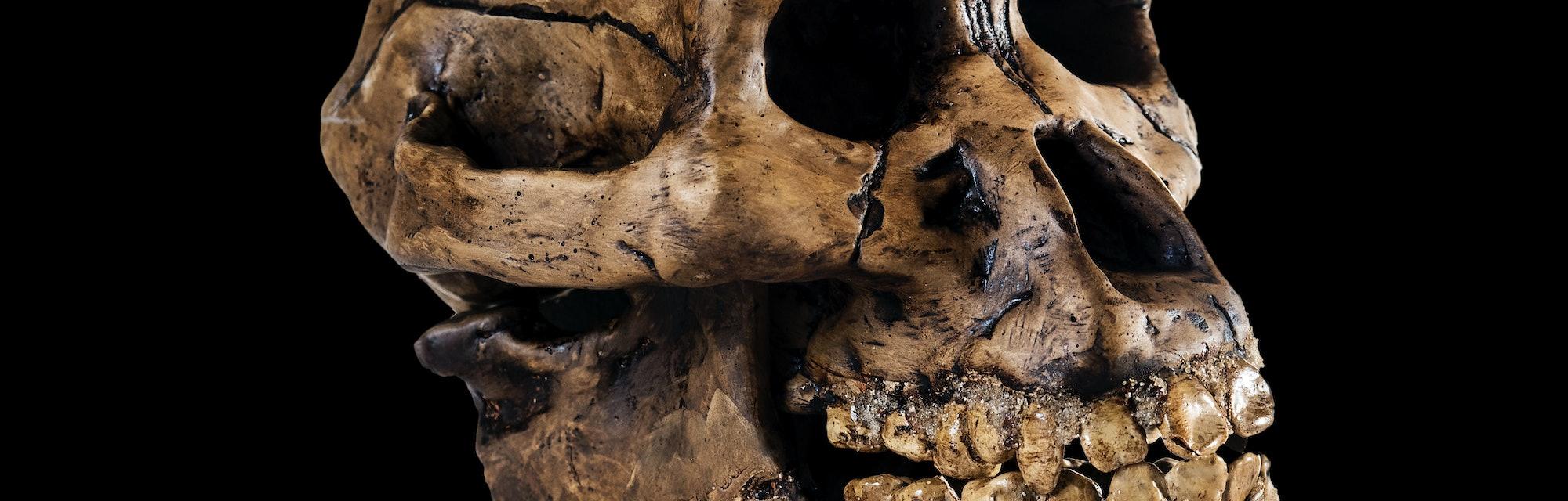 ancient human skull