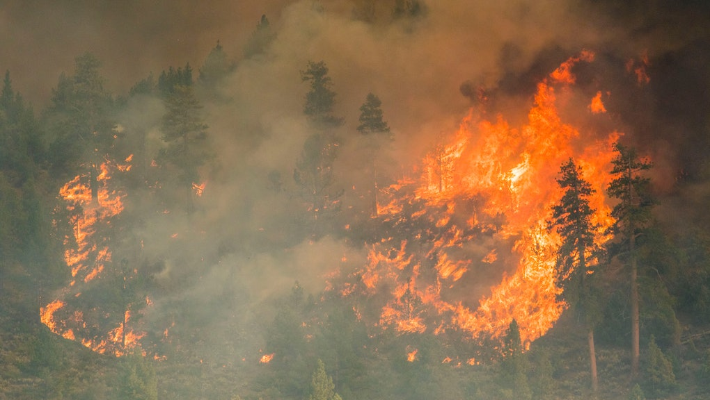 MARKLEEVILLE, CALIFORNIA, UNITED STATES - 2021/07/17: Fire engulfs trees at the Tamarack fire. The T...