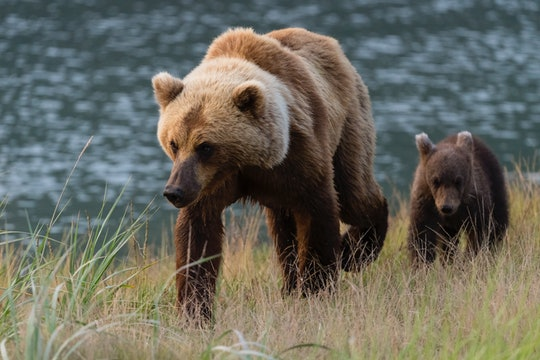 A mama bear stayed with her cub after it was hit by a car.