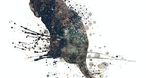 Black cat illustration oj white background