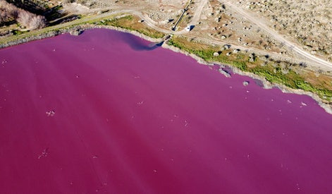 Aerial view of a lagoon that turned pink due to a chemical used to help shrimp conservation in fishi...