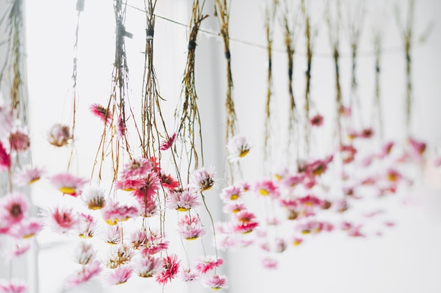 Photo of a string of dried hanging flowers with brown stems and small red buds.