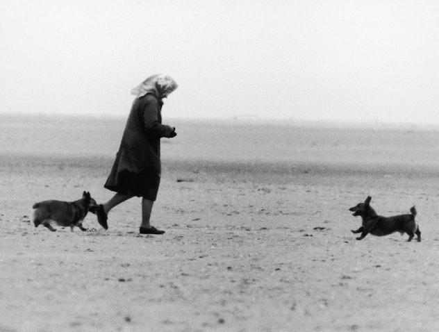 Queen Elizabeth walks the beach with her corgis.