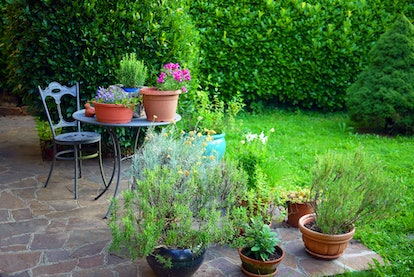 Idyllic Italian garden with wrought iron table and chair, on small patio, surrounded by herbs