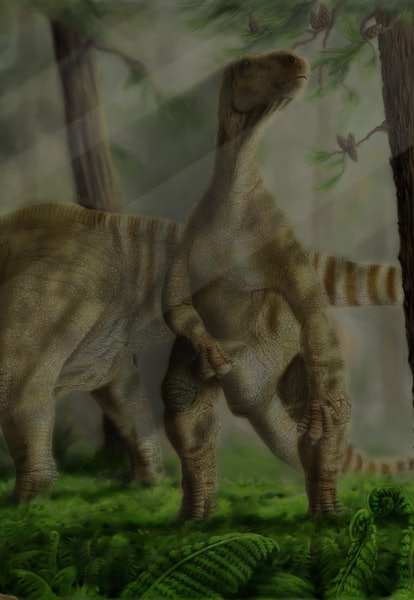 A pair of Iguanodon bernissartensis grazing, Belgium, Early Cretaceous (125,000,000 bp) Period. Ardeosaurus in foreground, Archaeopteryx in background.