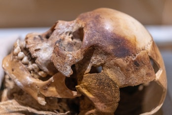 TORONTO, ONTARIO, CANADA - 2020/08/20: Skull of Nakht a young working man from ancient Egypt. The it...