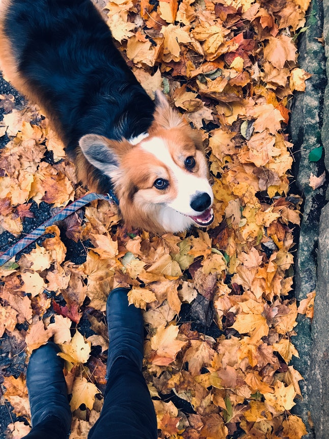 Personal Perspective of walking the dog in autumn