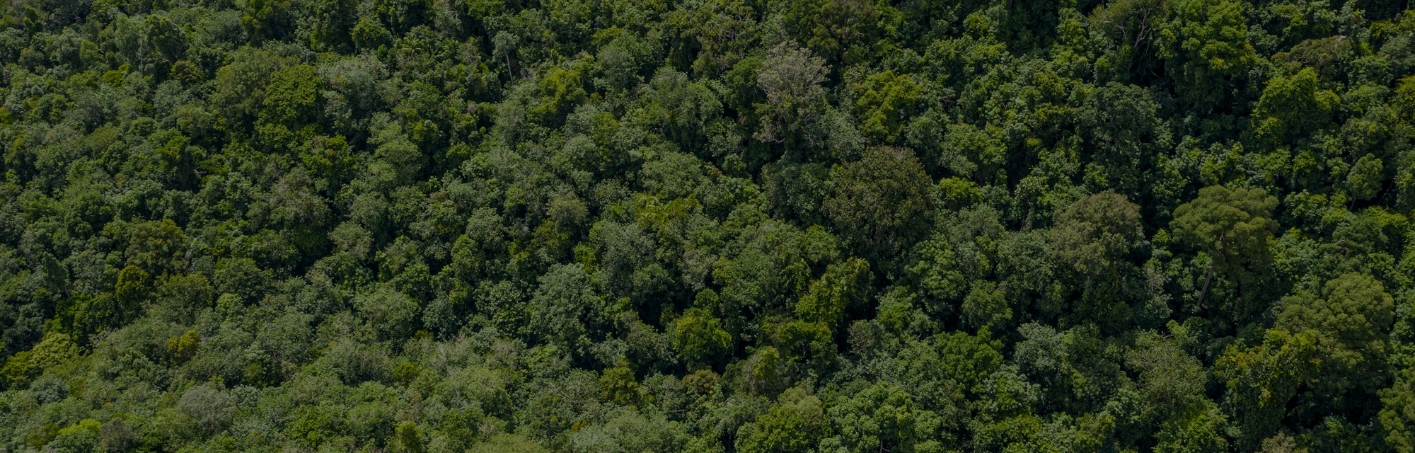 Aerial view of a lush green forest or woodland