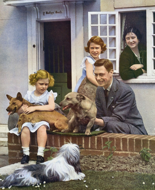 The whole York family loved dogs.