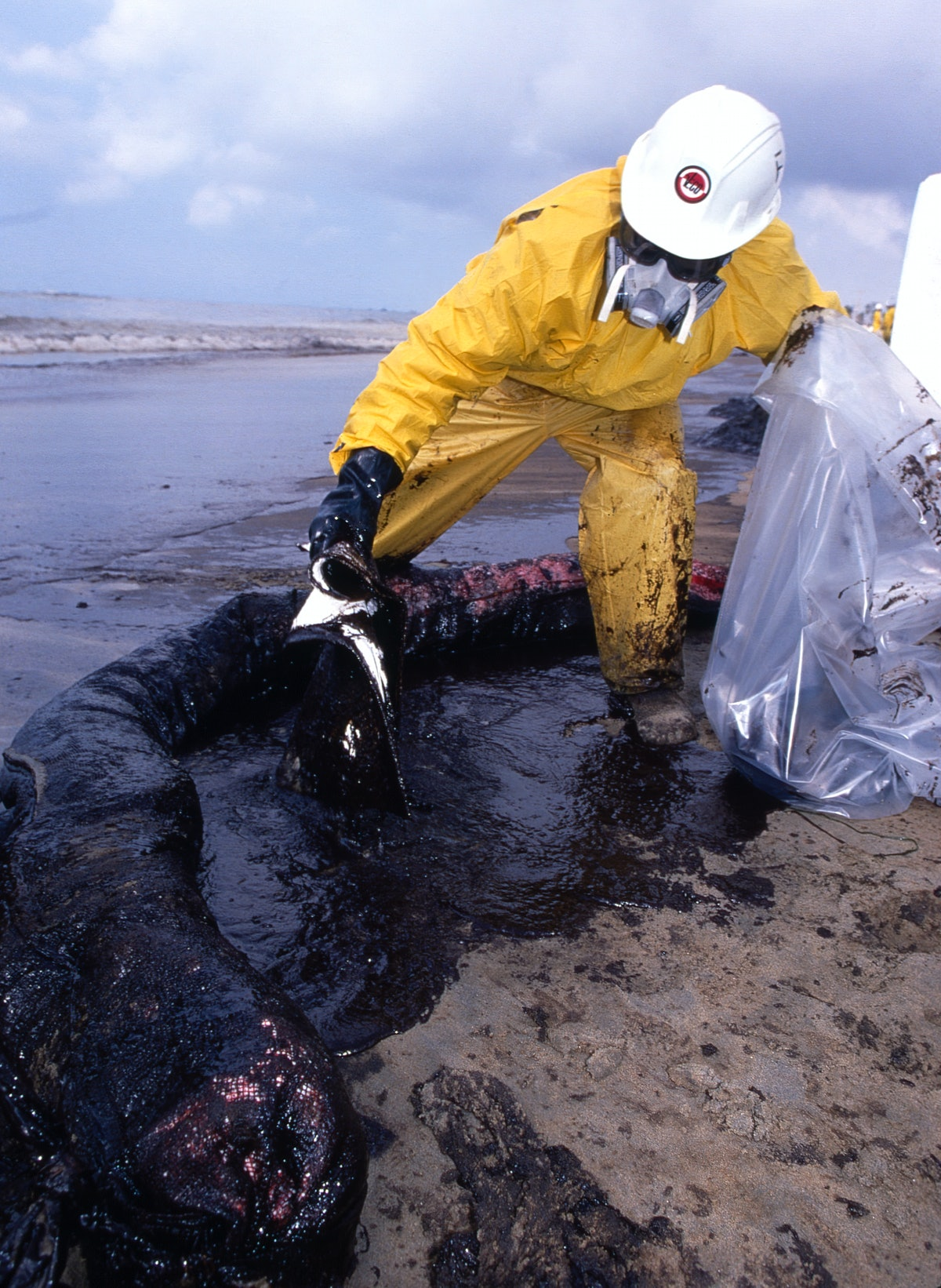 Trained HazMat workers clean up miles oil-drench sand after an off-shore oil spill occurred, Februa...