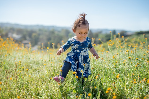 A cute toddler girl walking through wildflowers on a hot summer day.