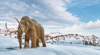 Woolly mammoth set in a winter scene environment. 16/9 Panoramic format. Realistic 3d illustration.